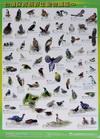 台灣保育類野生動物圖鑑海報(3張1套,99/4出版)